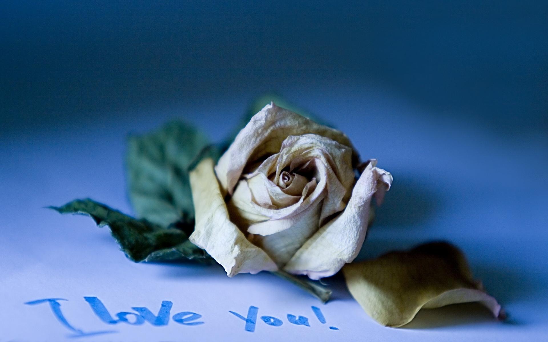 Красивая натпись цветы фото