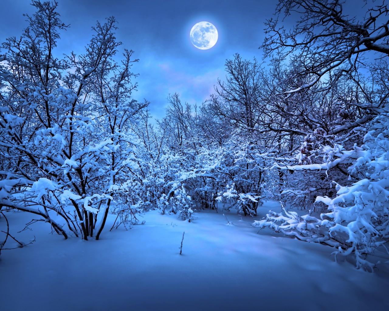 ночь зима картинки