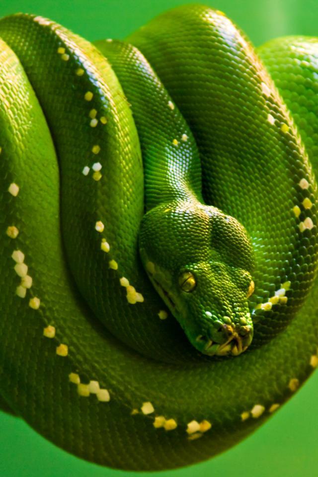 заставка на телефон змея № 57090 бесплатно