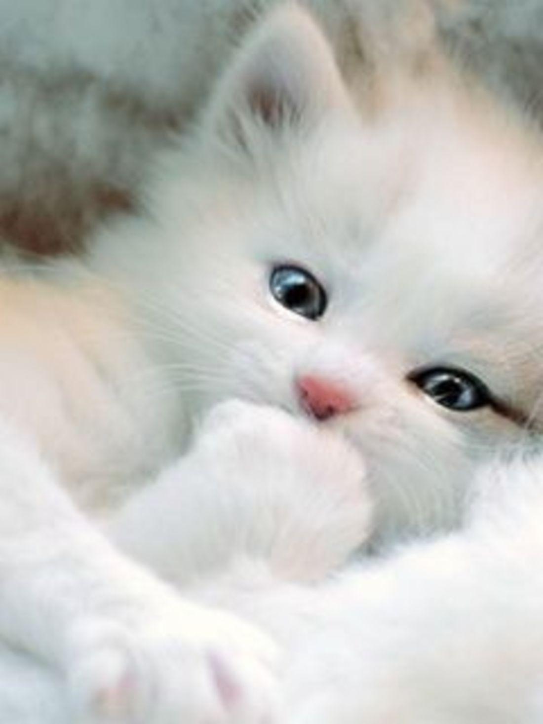 котёнок красивый фото