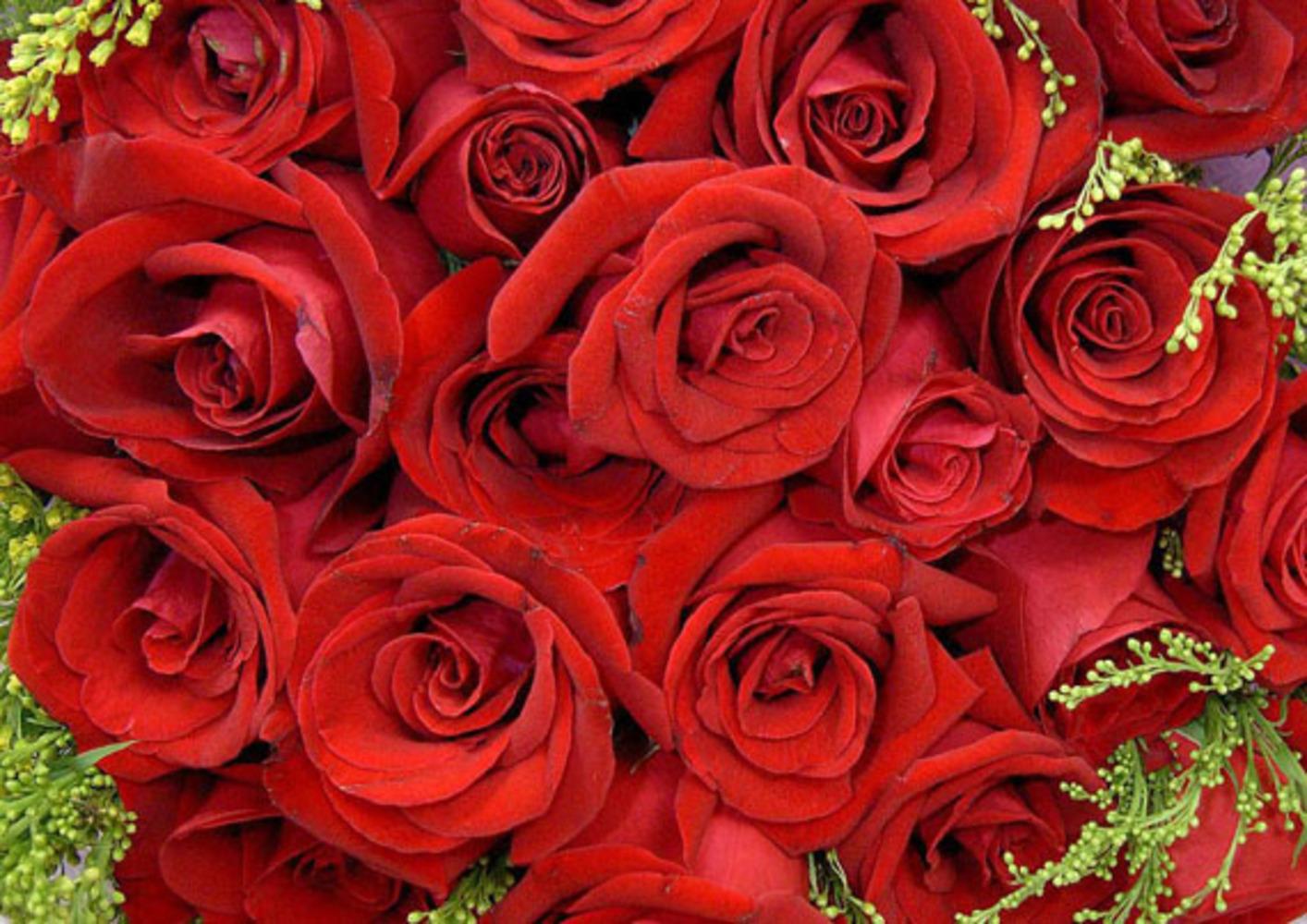 Букеты цветов фото розы красные для девушки