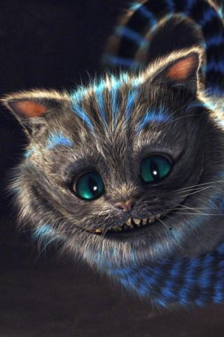 Фото котов с айфоном