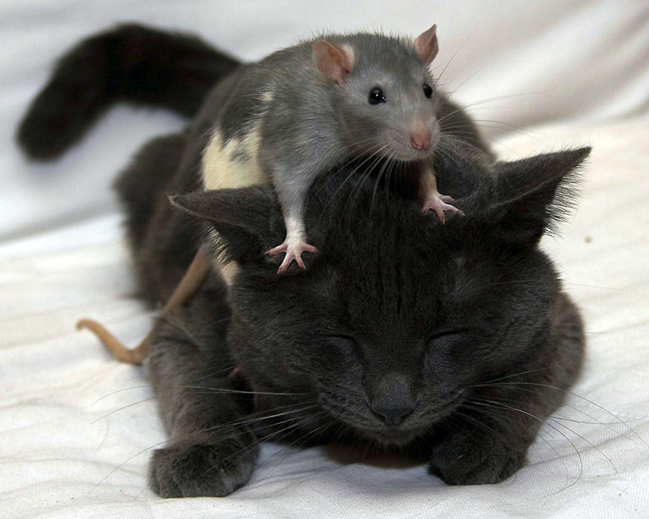 лови мышей а не нас правила