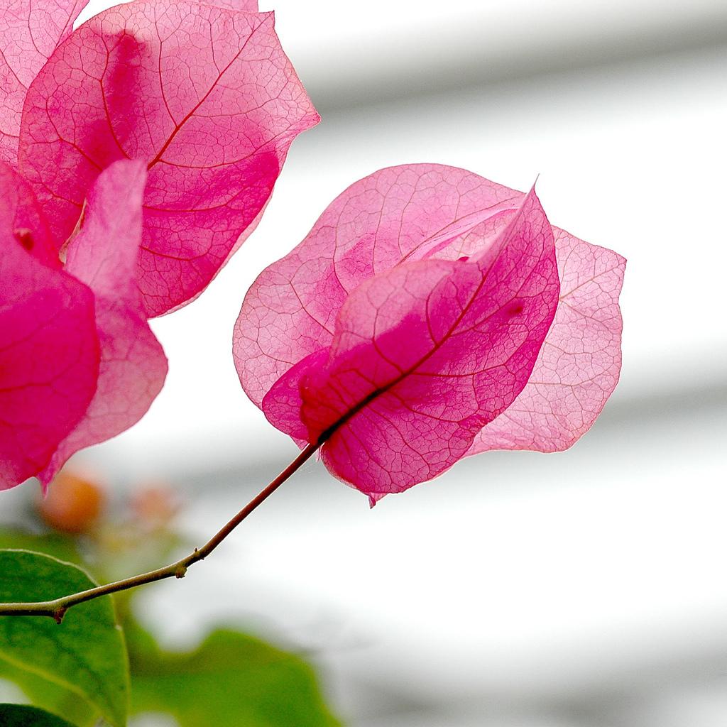 Не обычные цветы