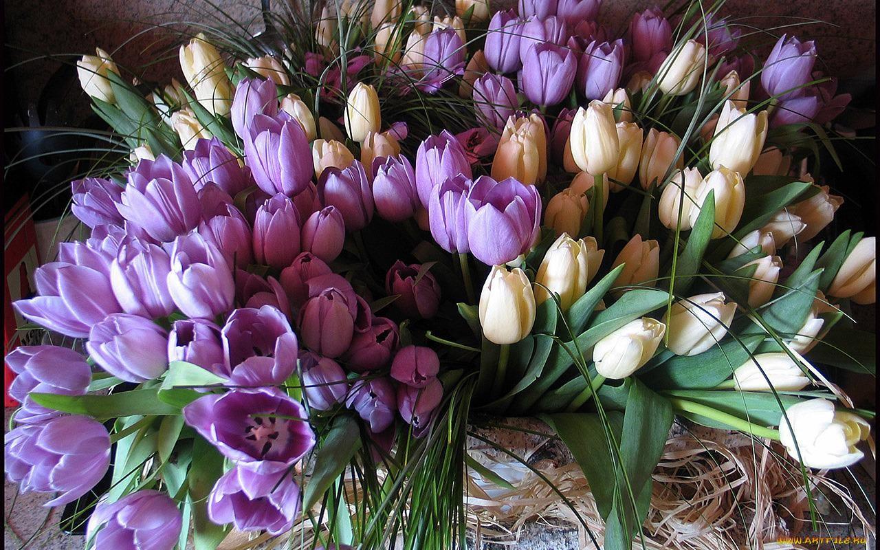 Тюльпаны красивая открытка 98