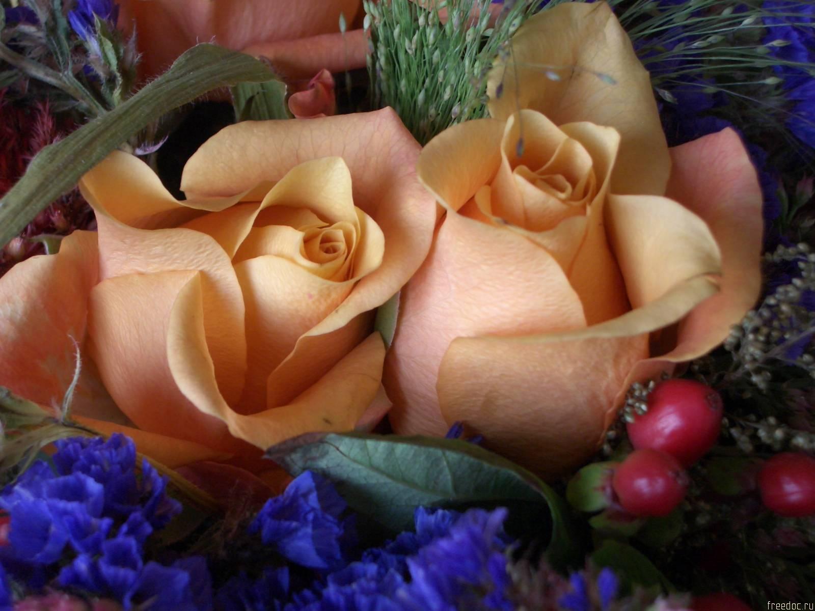 Цветы дан
