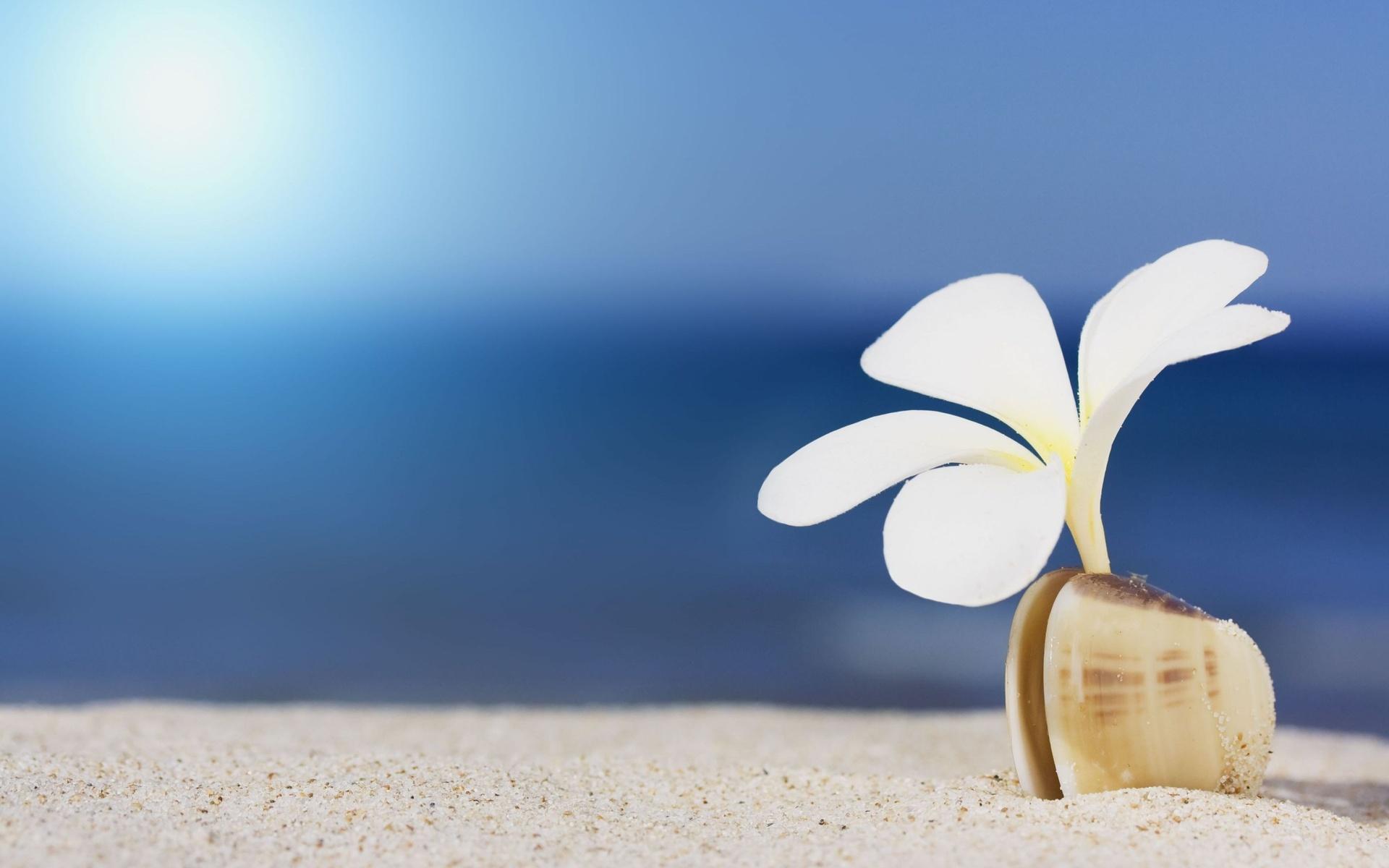 Море белых цветов