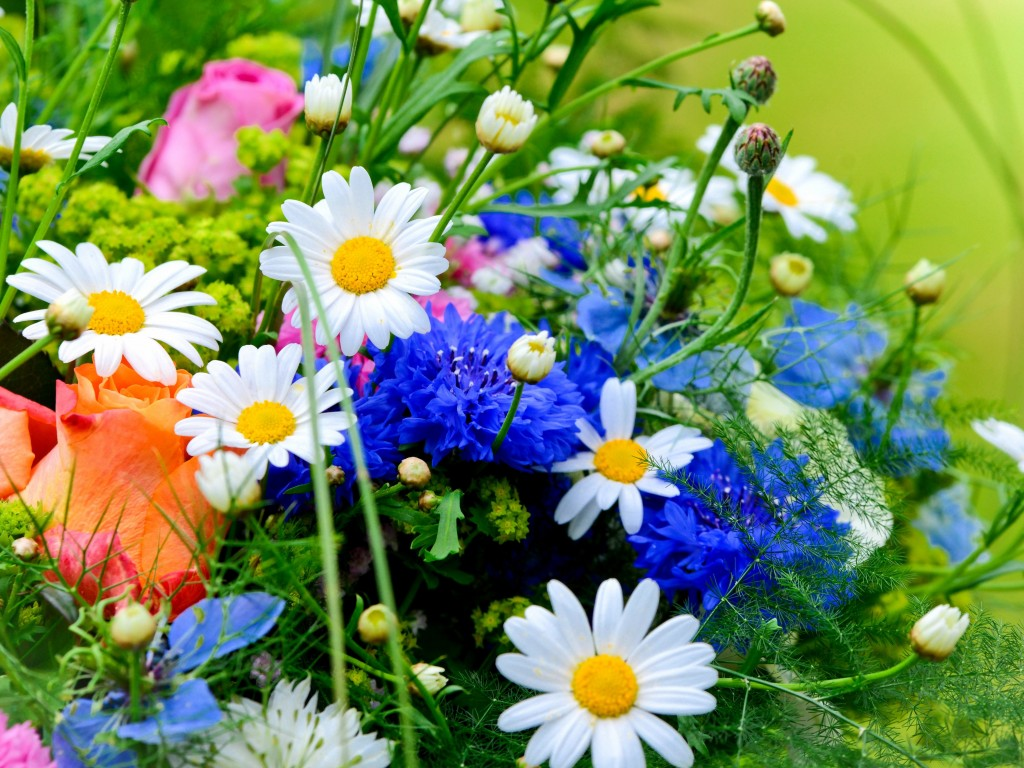 Широкоформатные обои на рабочий стол полевые цветы