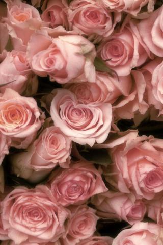 фото роз на заставку телефона № 42556 загрузить